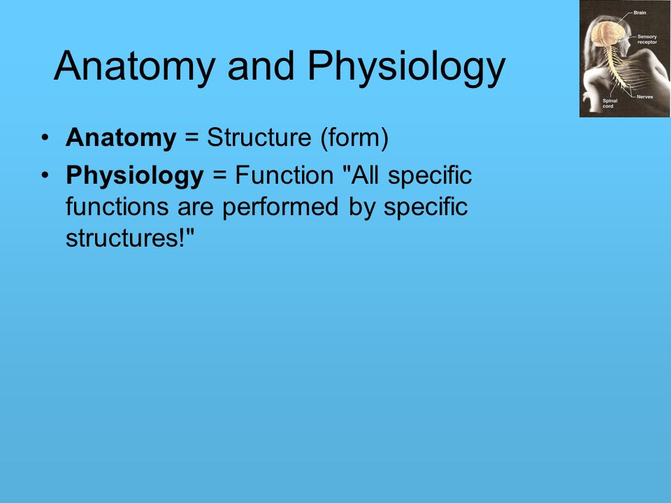 Human Physiology and Anatomy - ppt download