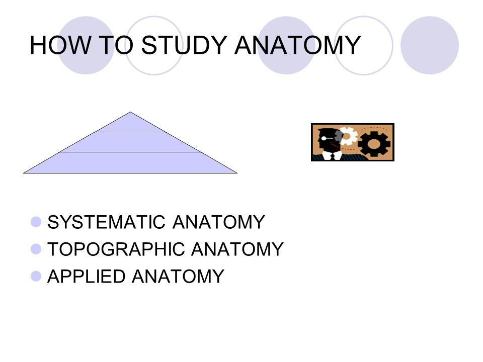 General Of The Anatomy Veteriner Ppt Download