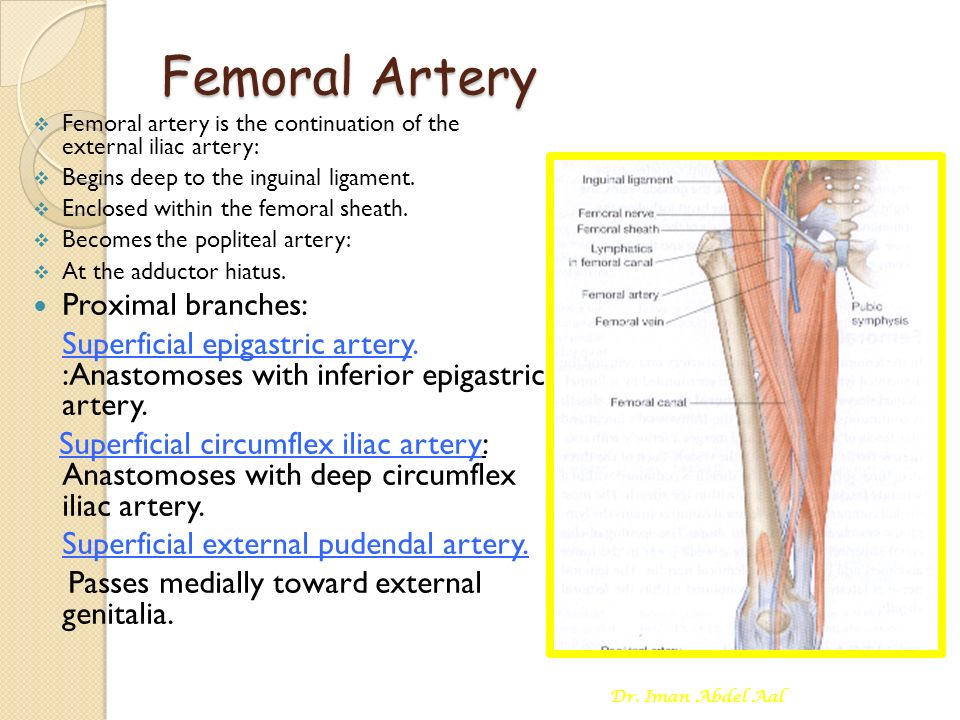 Arterial Supply Of The Lower Limb Ppt Video Online Download