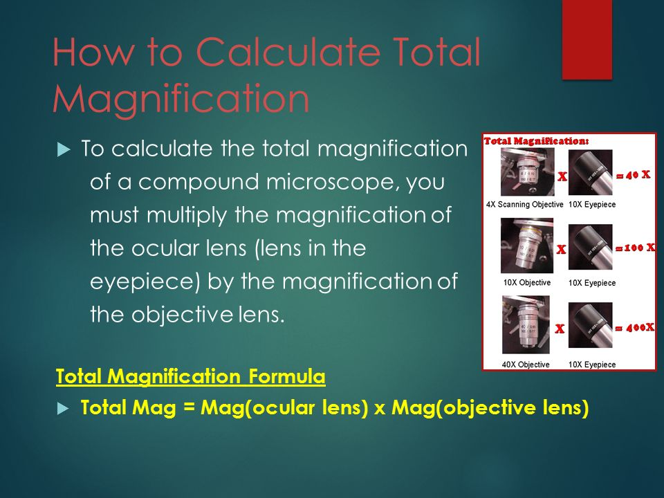 how is the total magnification of a microscope calculated