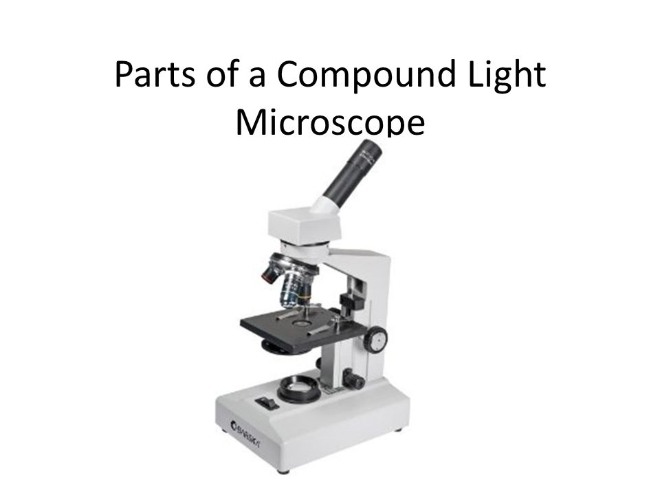 using a compound light microscope Can you name the name the parts of the compound light microscope test your knowledge on this science quiz to see how you do and compare your score to others.