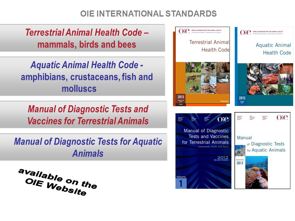 oie aquatic animal health code and ppt video online download rh slideplayer com Oie in English oie terrestrial manual 2010 pdf