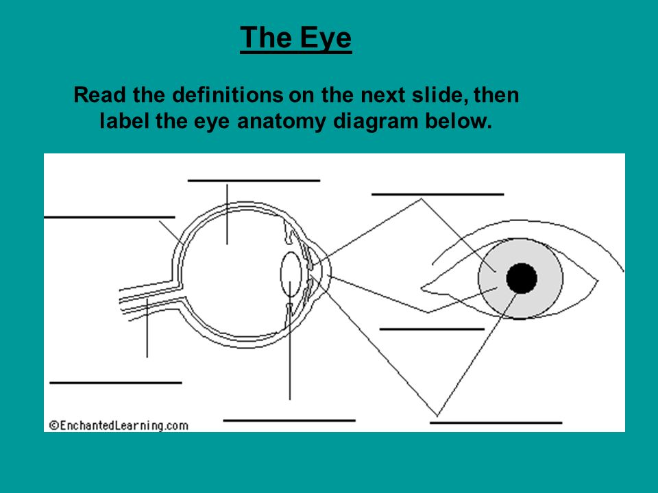 20 the eye read the definitions on the next slide, then label the eye  anatomy diagram below
