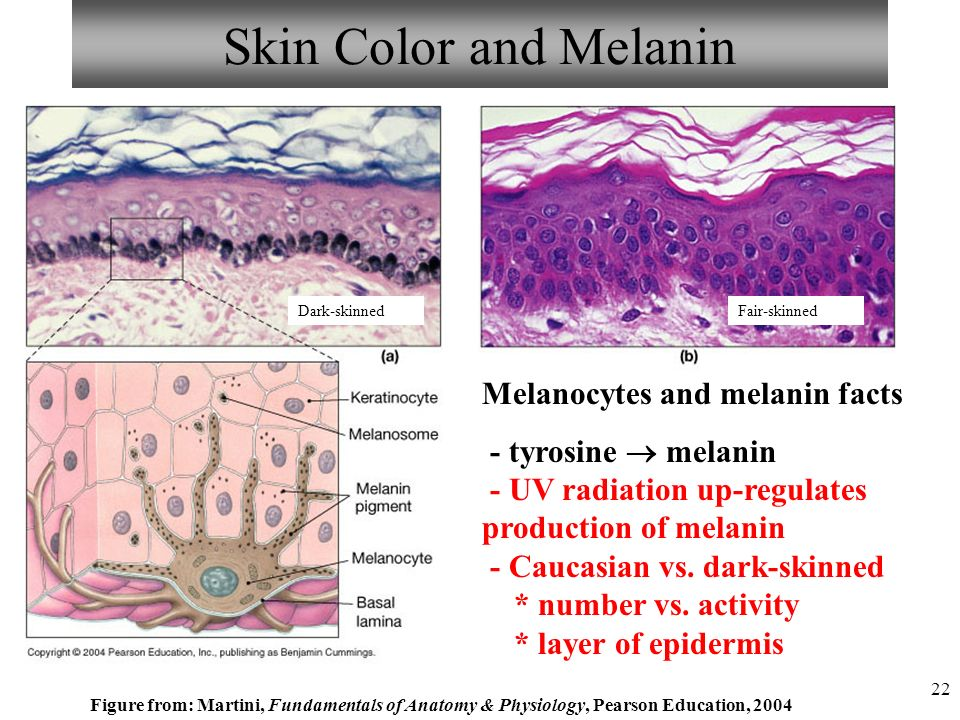 Visual Anatomy & Physiology First Edition Martini & Ober - ppt video ...
