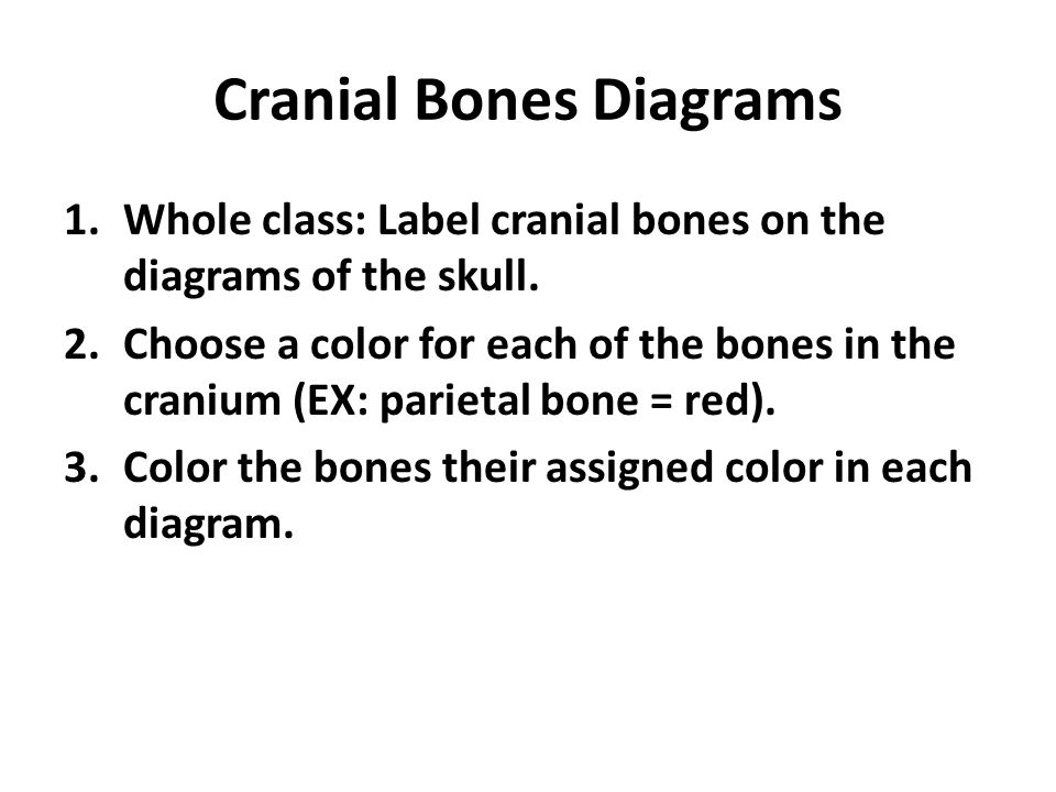 Skull Usually Consists Of 22 Bones All Of Which Except The Lower