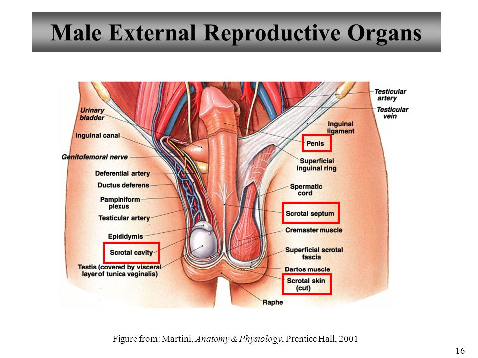 Moderno Anatomy And Physiology Reproductive System Practice Test ...