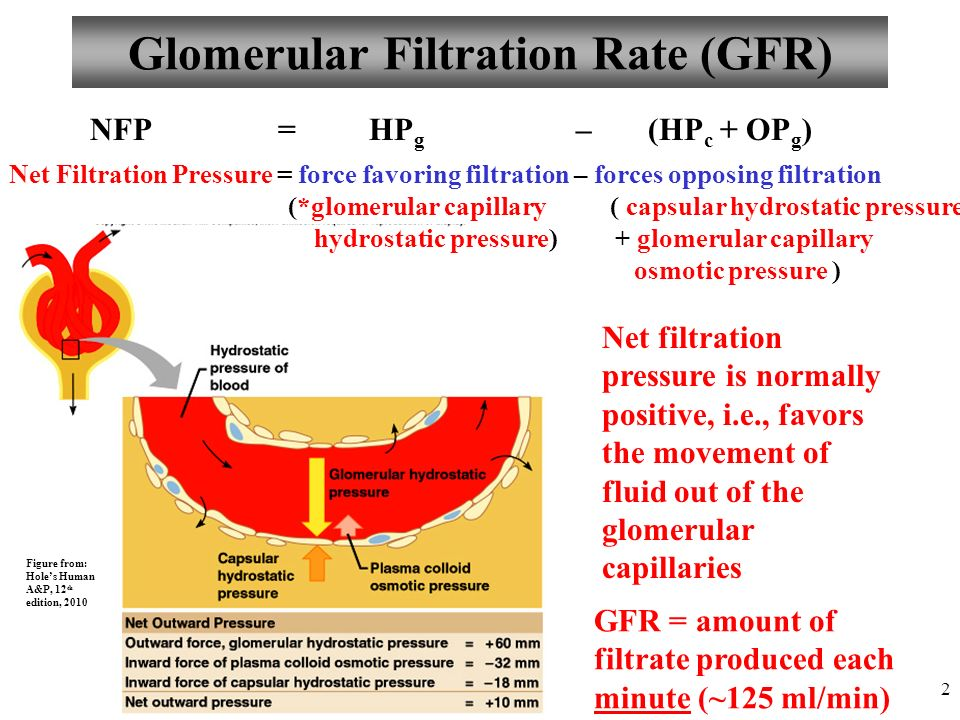 Anatomy and Physiology Part 3: Urine Formation, GFR, Control of GFR ...