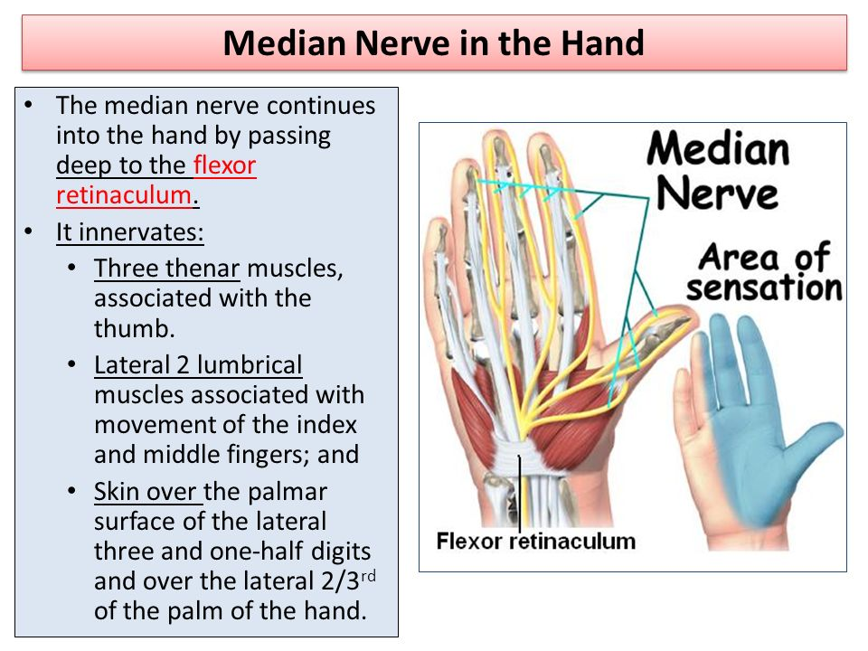 Axillary Median Nerves Ppt Video Online Download