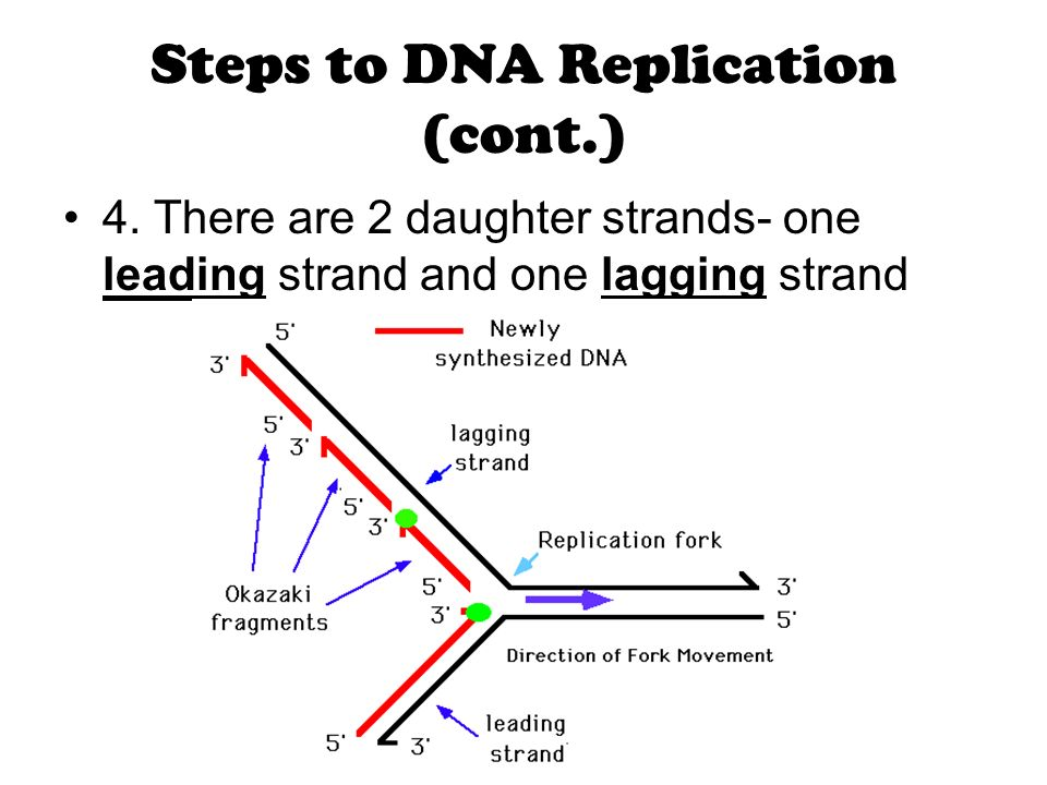 Dna replication ppt video online download leading strand and one lagging strand steps to dna replication cont ccuart Image collections