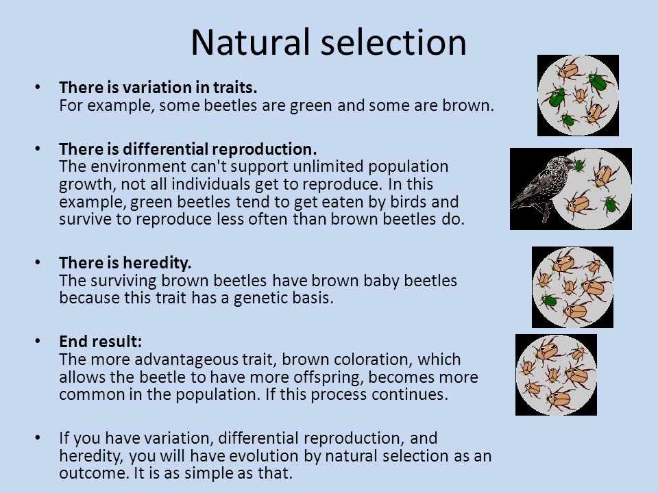Diffrence In Natural And Artificial Selection