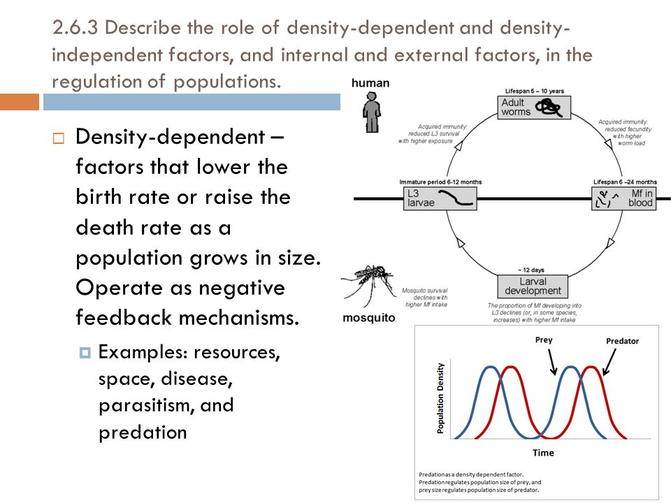 Examples Of Density Dependent Factors Images Example Cover Letter