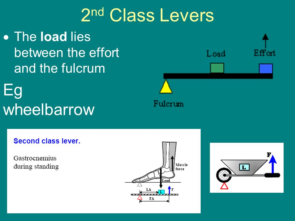 Levers Ppt Video Online Download