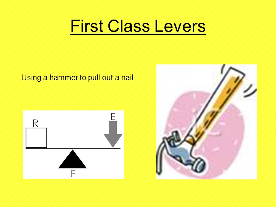 first class lever example in human body