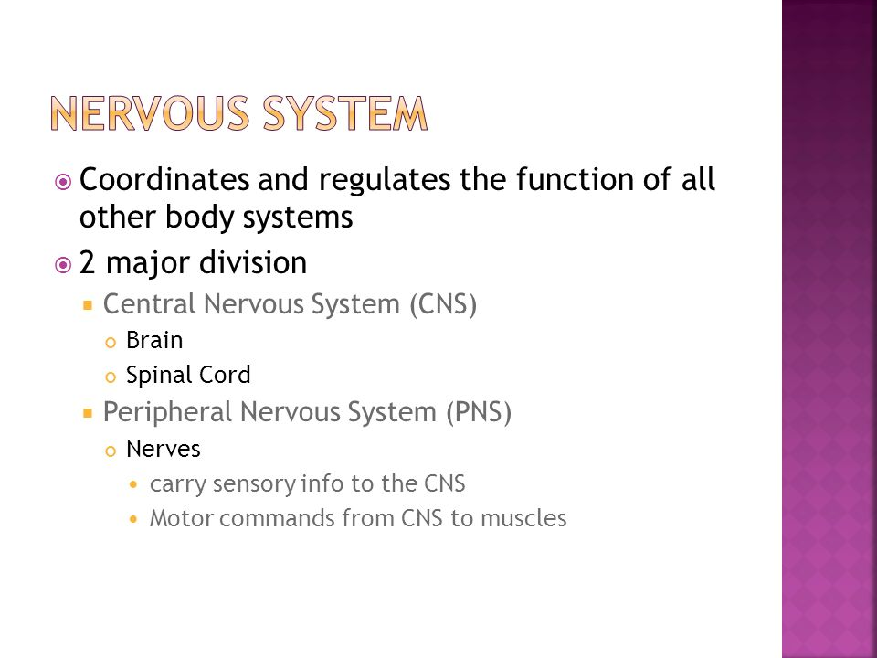 Nervous system Coordinates and regulates the function of all other body systems. 2 major division.