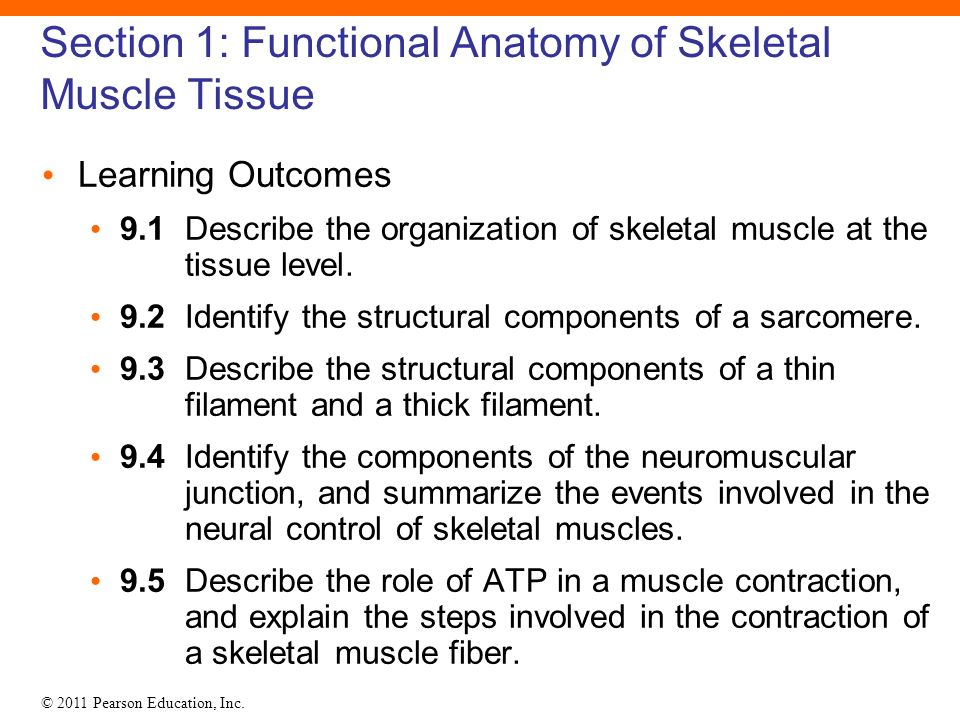 9 Skeletal Muscle Tissue Ppt Download