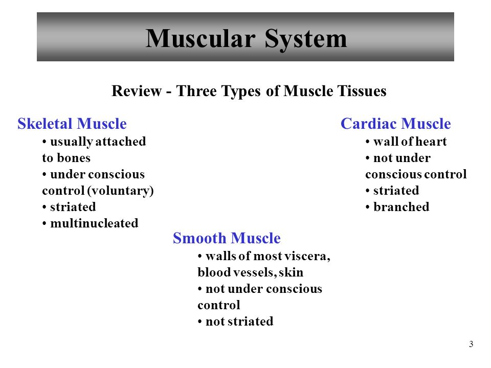 Anatomy and Physiology Muscles and Muscle Tissue - ppt video online ...