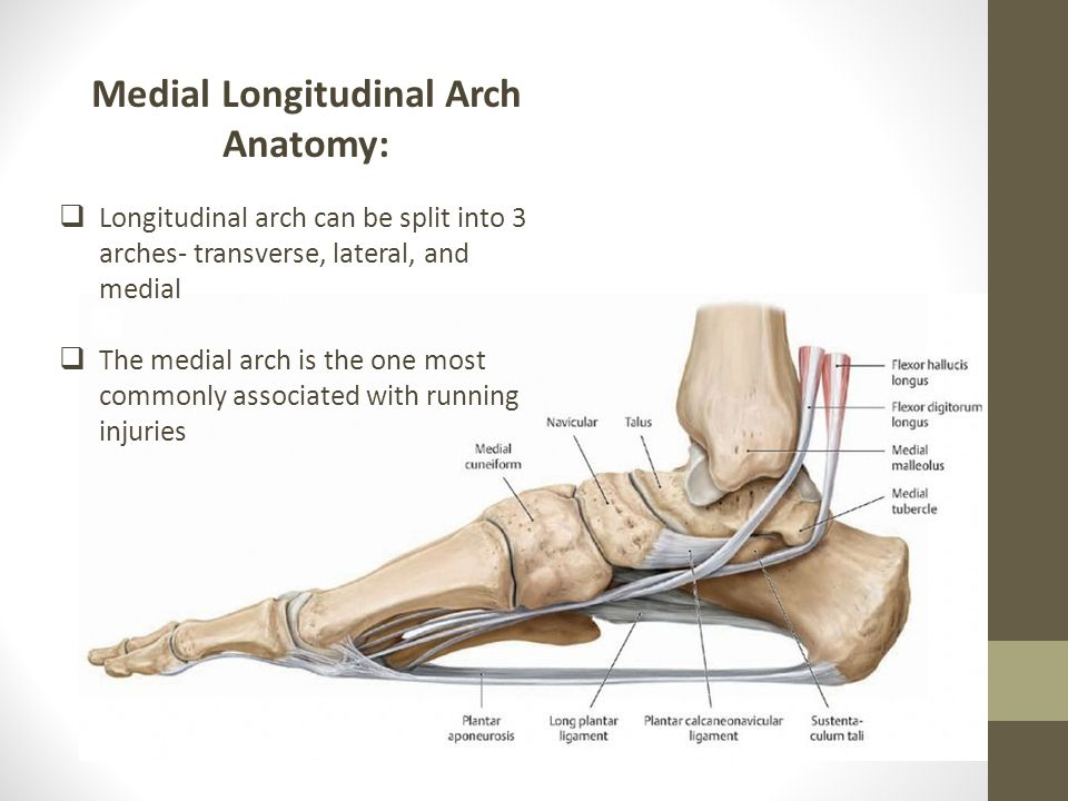 The Evolution of the Longitudinal Arch: - ppt video online download