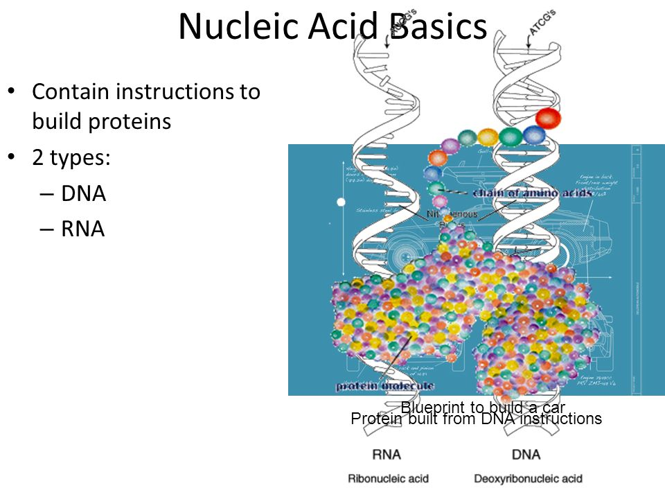 Nucleic Acids Ppt Video Online Download