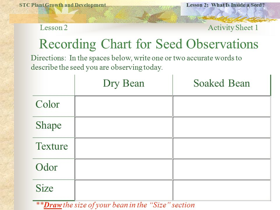 Stc Plant Growth And Development Lesson 2 What Is Inside A Seed