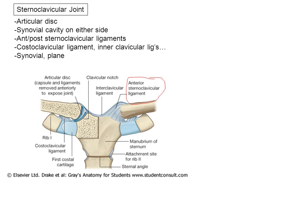 Joints of the Upper Limb - ppt download