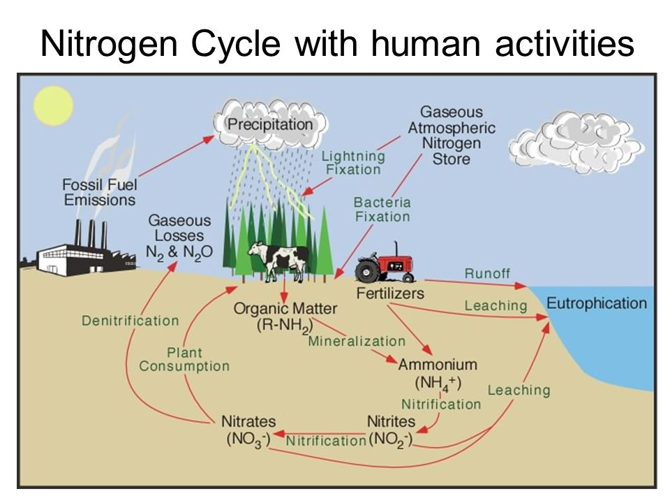 Nitrogen Cycle with human activities
