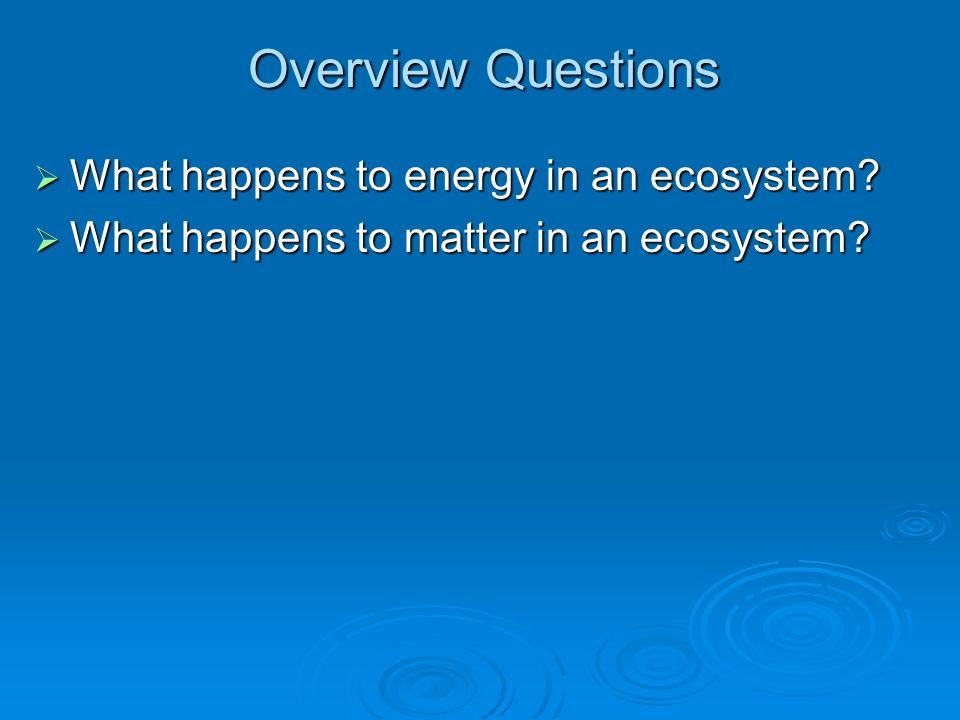 Overview Questions What happens to energy in an ecosystem