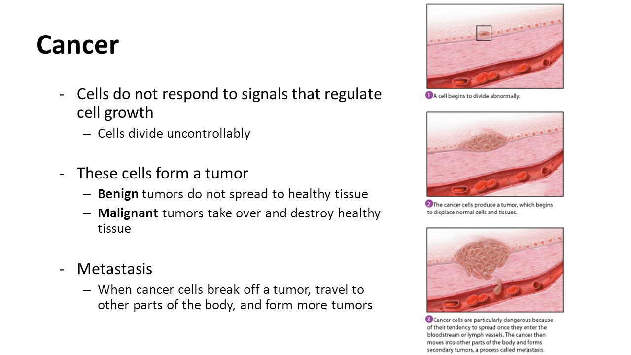 Cancer Cells do not respond to signals that regulate cell growth