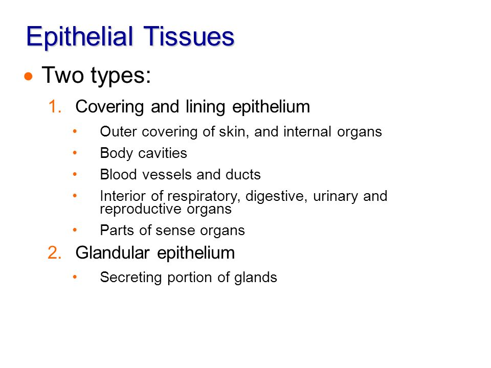 various types of epithelial tissue