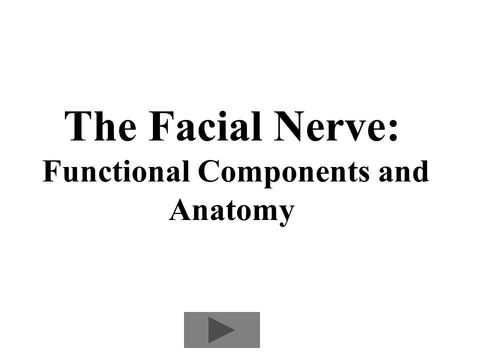 The Facial Nerve Functional Components And Anatomy Ppt Download