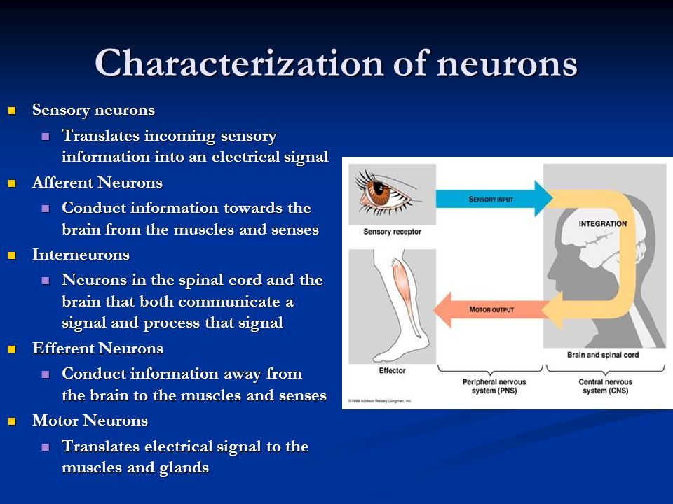 Characterization of neurons