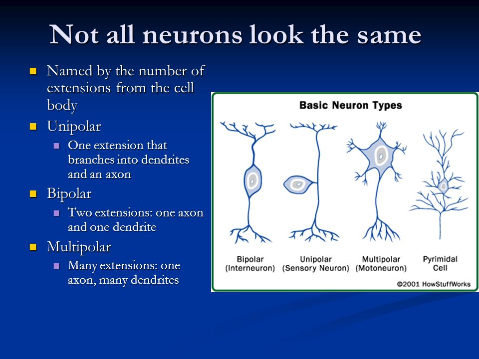 Not all neurons look the same