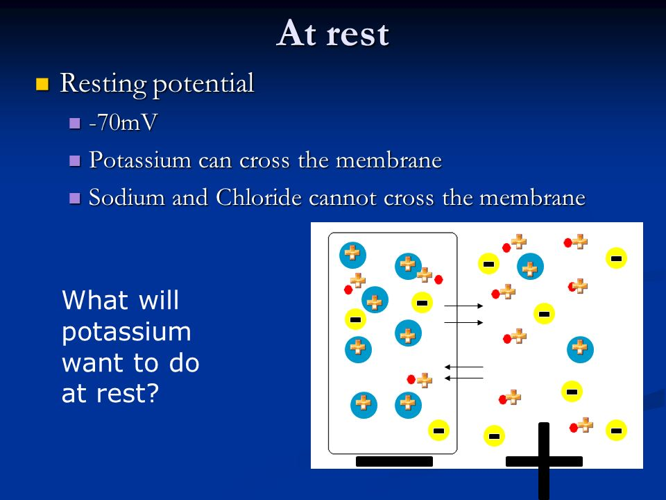 At rest Resting potential -70mV Potassium can cross the membrane