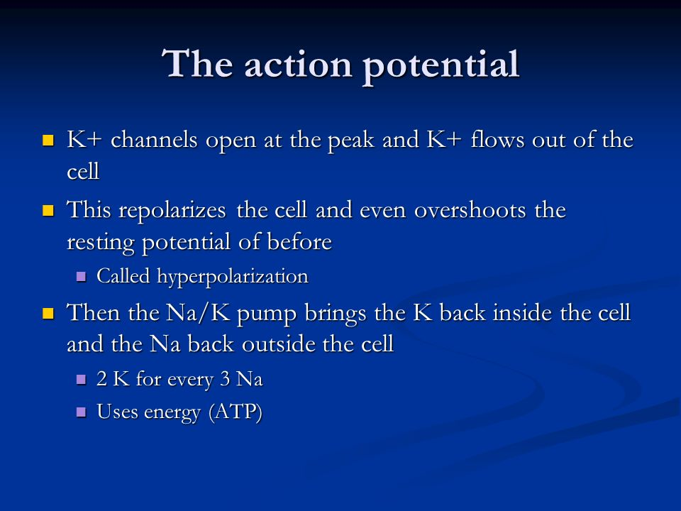 The action potential K+ channels open at the peak and K+ flows out of the cell.