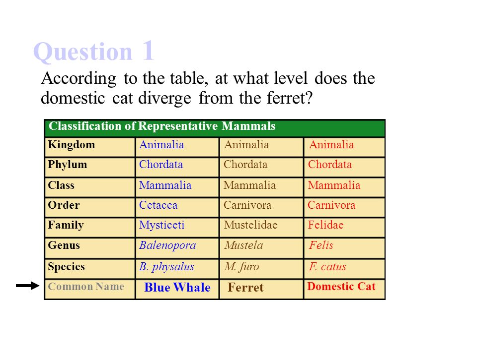 Image of: Phylum Chordata 15 Question Slideplayer Section 171 Summary Pages Ppt Video Online Download