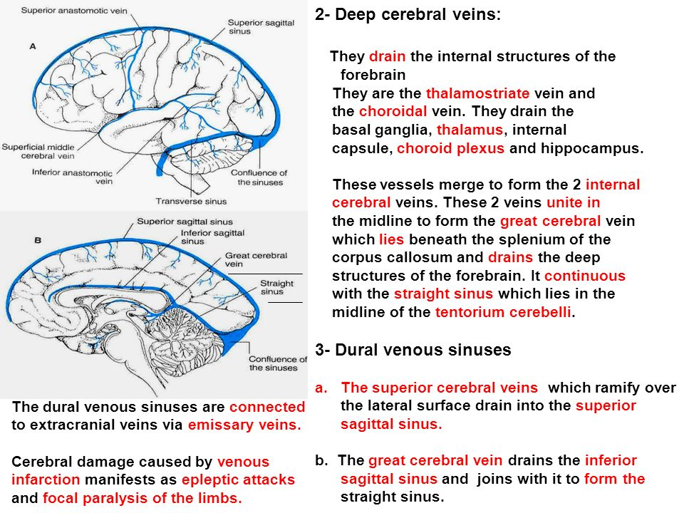 Blood Supply Of The Brain Ppt Video Online Download