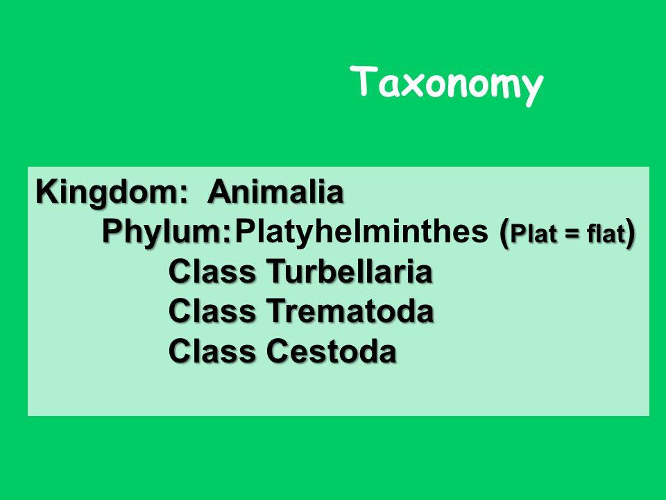 Plathelminthen taxonok. Állatrendszertan (BIB ) gyakorlat