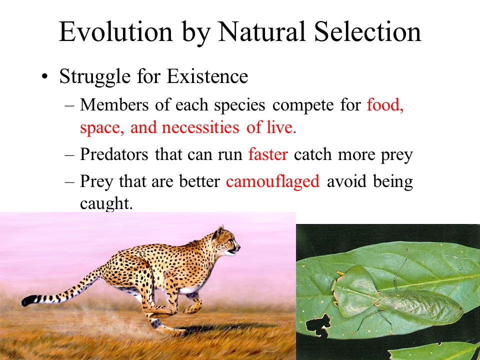 evolution by natural selection ppt download