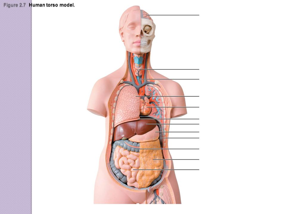 Organ Systems Overview - ppt video online download
