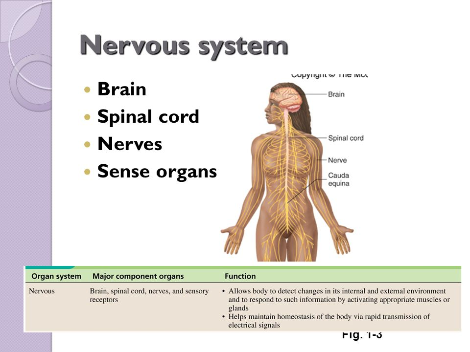 Organ Systems Overview Ppt Video Online Download
