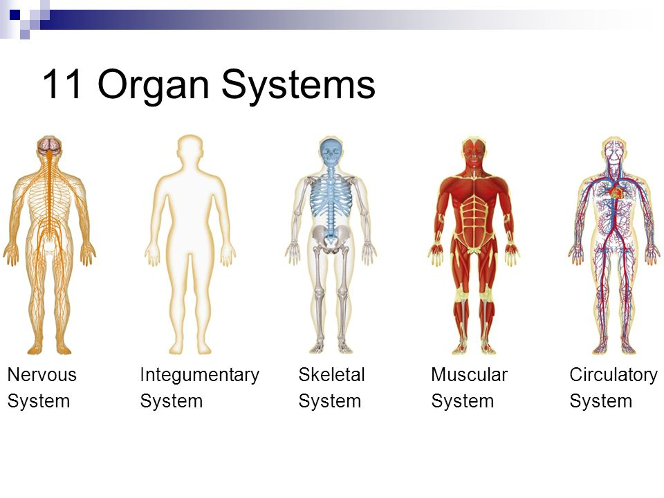 Quick Write List three organ systems and describe their function ...