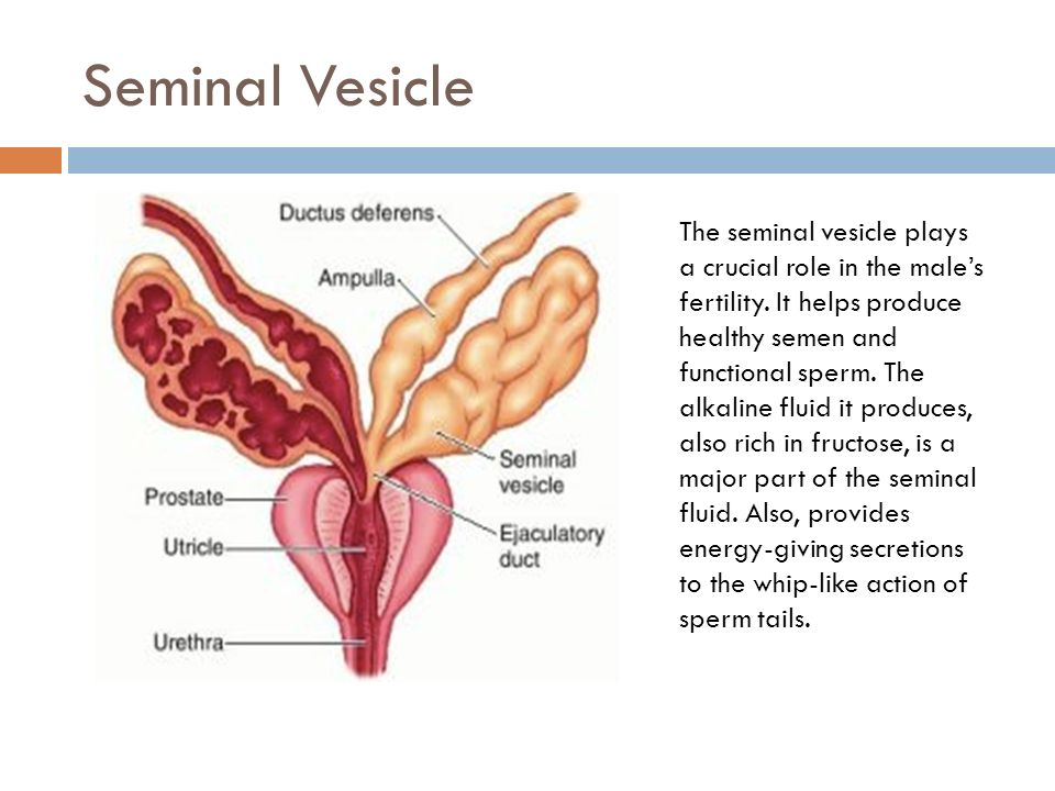 Female & male anatomy 101 Emily Turner - ppt video online download