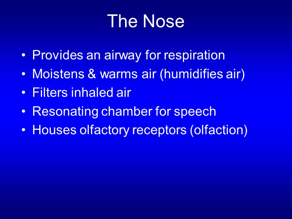 The Nose Provides an airway for respiration