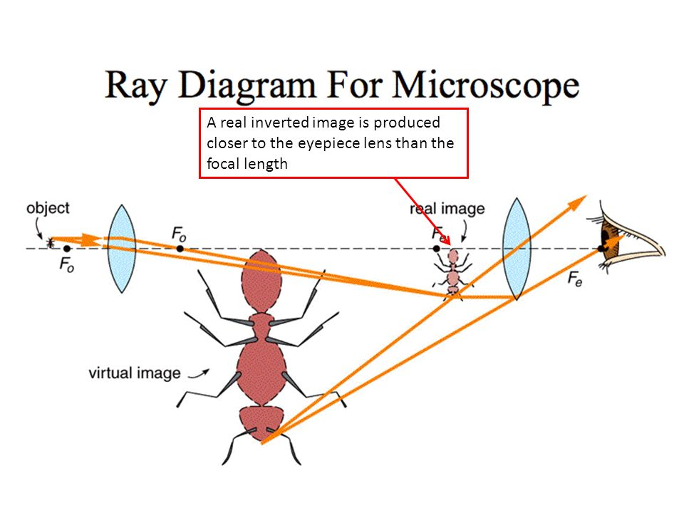 Lesson 6 microscope and telescope ppt download 6 a ccuart Image collections
