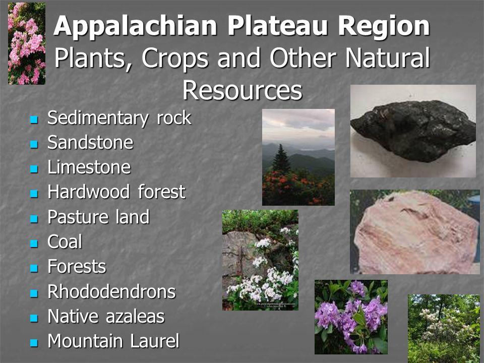 Natural Resources In The Appalachian Plateau Region In Georgia