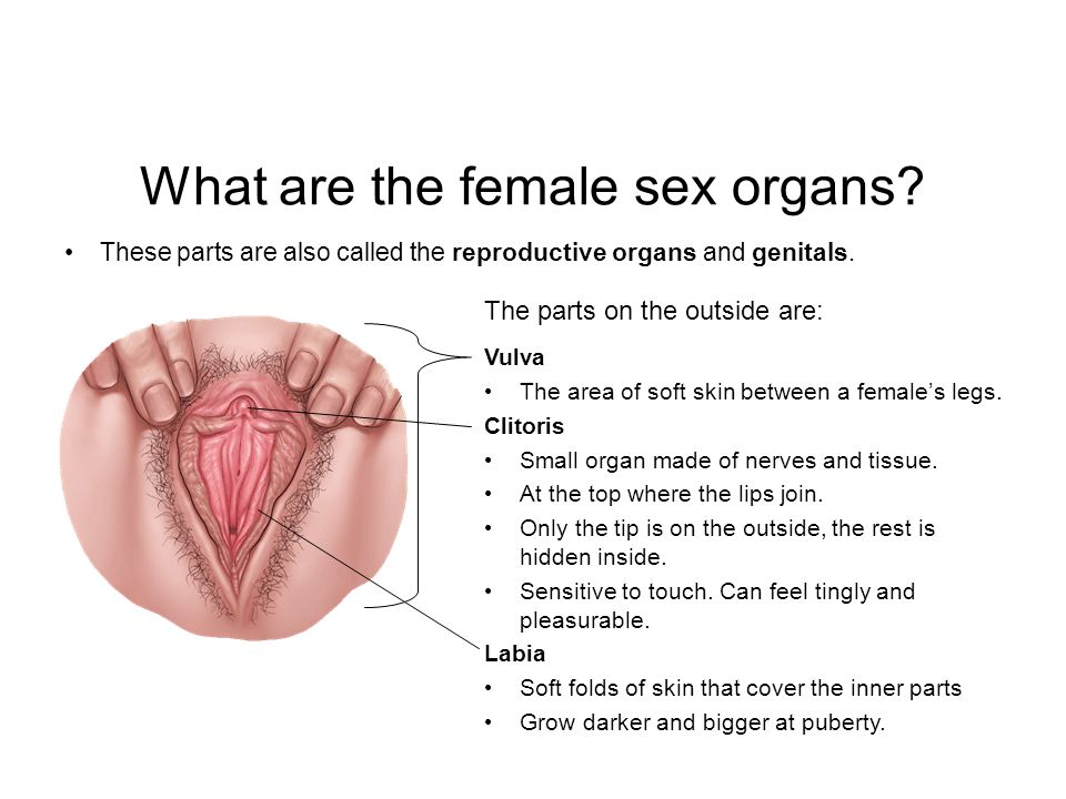 Female with both sex organs, girls cunts line up