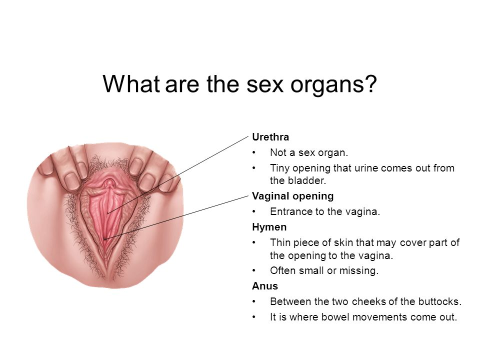When do sex organs form