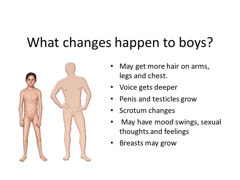 sex growing up organs photos penis