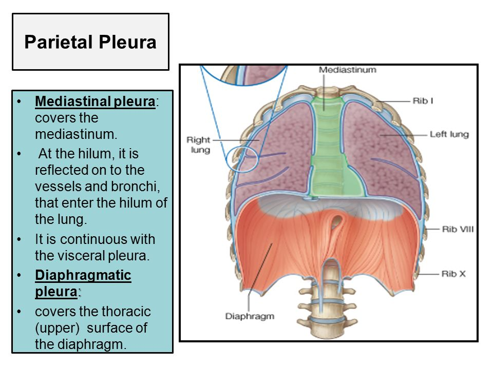 PLEURA & LUNG Prof. Saeed Abuel Makarem. - ppt video online download