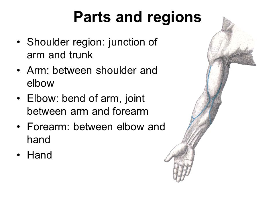 Regional Anatomy Of Upper Limb Ppt Video Online Download
