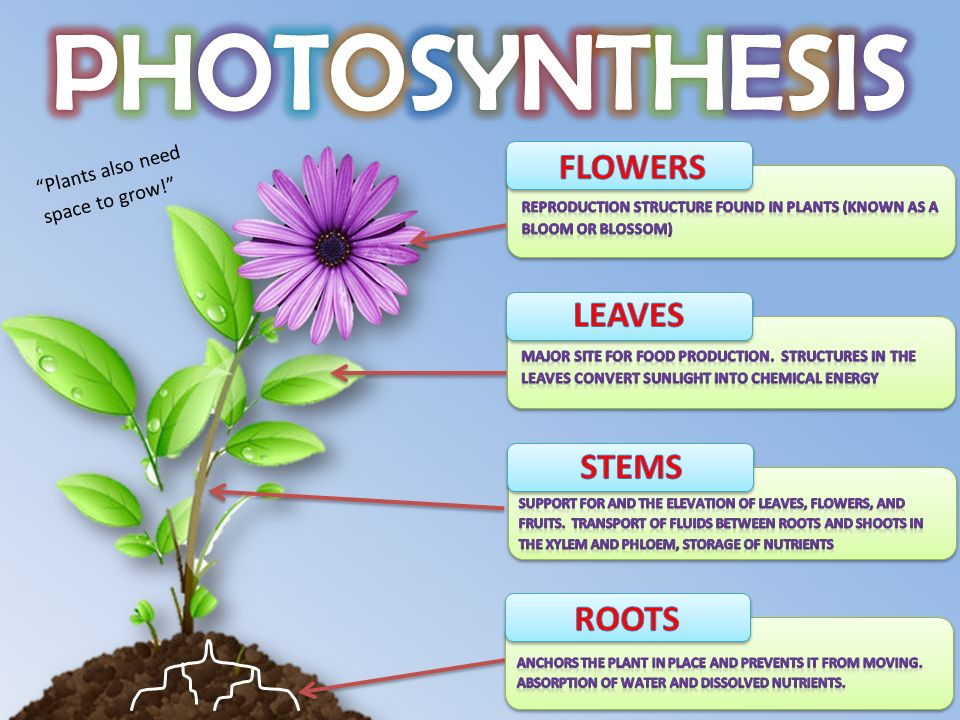 Photosynthesis Converting Light Energy Into Food Cellular